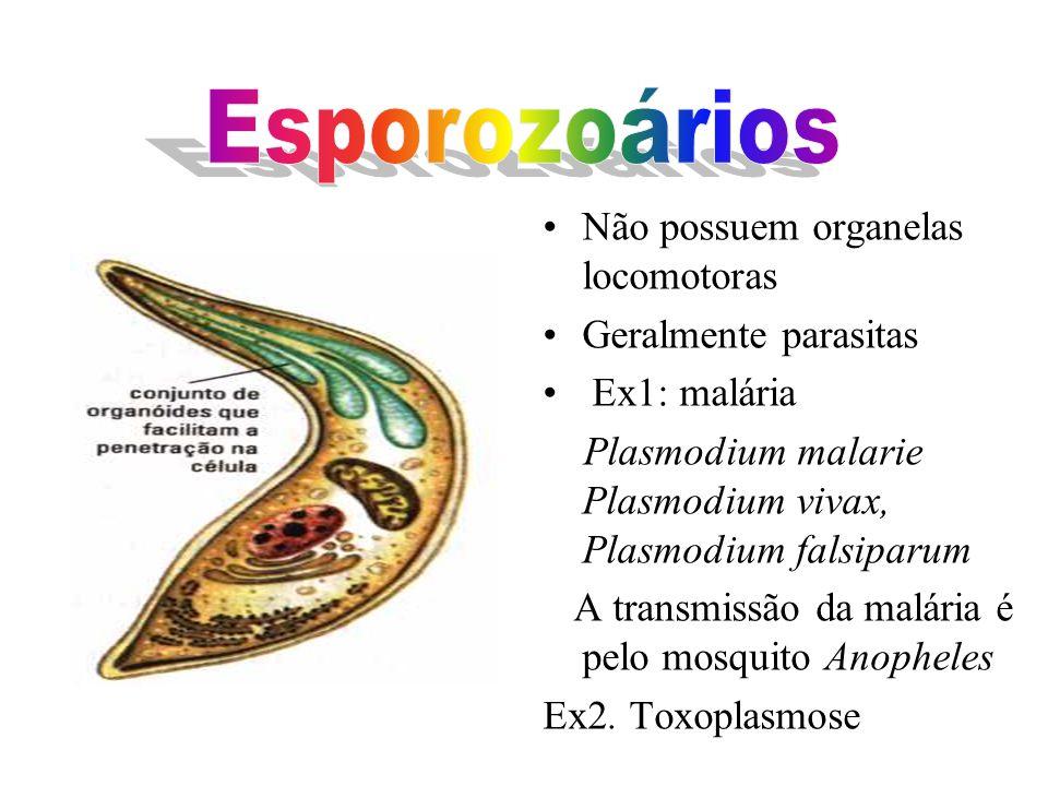 Locomoção por flagelo Muitos patogênicos Ex:Trypanosoma cruzi (Doença. de Chagas) Giardia intestinalis (Cólicas e Diarréia) Leishmania brasiliensis (Ú