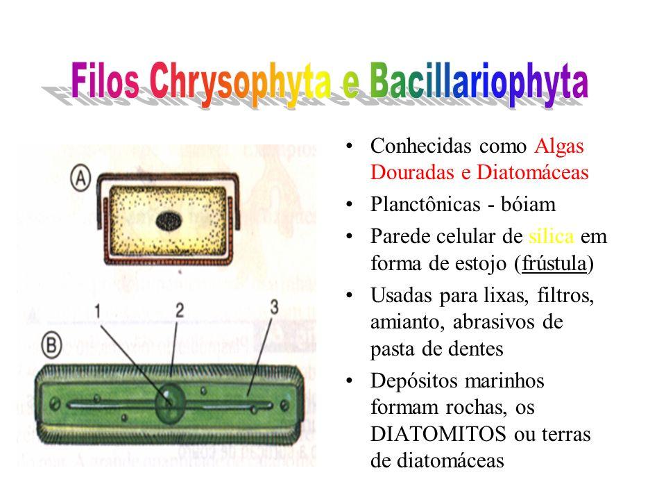 Conhecidas como Algas Douradas e Diatomáceas Planctônicas - bóiam Parede celular de sílica em forma de estojo (frústula) Usadas para lixas, filtros, amianto, abrasivos de pasta de dentes Depósitos marinhos formam rochas, os DIATOMITOS ou terras de diatomáceas