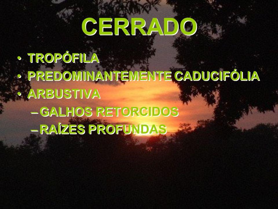 CERRADO TROPÓFILA PREDOMINANTEMENTE CADUCIFÓLIA ARBUSTIVA –GALHOS RETORCIDOS –RAÍZES PROFUNDAS TROPÓFILA PREDOMINANTEMENTE CADUCIFÓLIA ARBUSTIVA –GALH