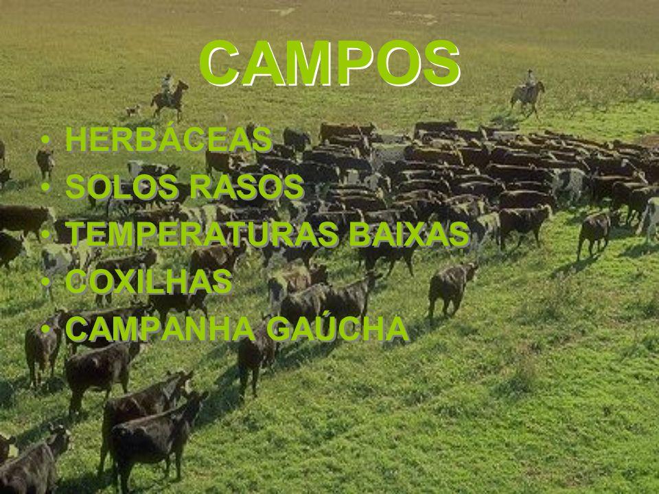 CAMPOS HERBÁCEAS SOLOS RASOS TEMPERATURAS BAIXAS COXILHAS CAMPANHA GAÚCHA HERBÁCEAS SOLOS RASOS TEMPERATURAS BAIXAS COXILHAS CAMPANHA GAÚCHA