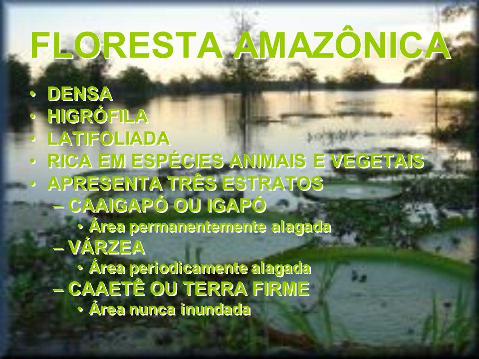 FLORESTA AMAZÔNICA DENSA HIGRÓFILA LATIFOLIADA RICA EM ESPÉCIES ANIMAIS E VEGETAIS APRESENTA TRÊS ESTRATOS –CAAIGAPÓ OU IGAPÓ Área permanentemente ala