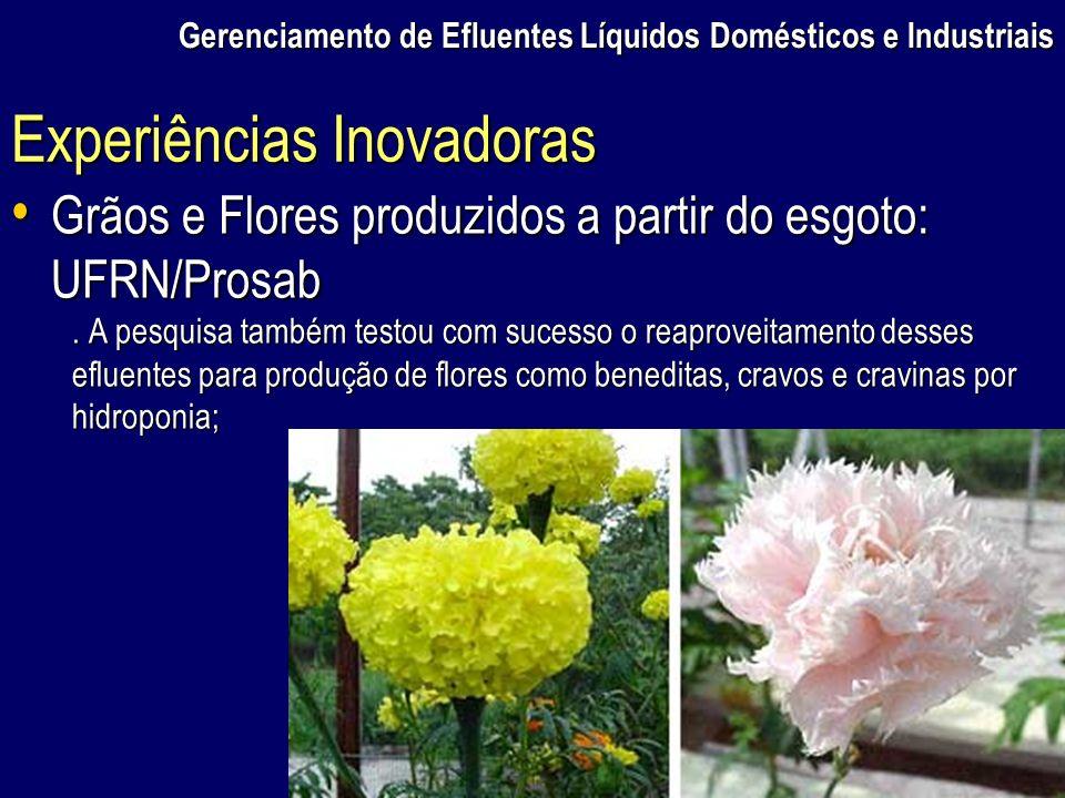 Gerenciamento de Efluentes Líquidos Domésticos e Industriais Grãos e Flores produzidos a partir do esgoto: UFRN/Prosab Grãos e Flores produzidos a par