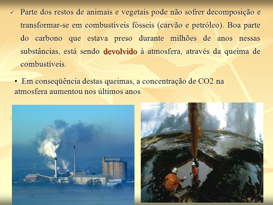 Parte dos restos de animais e vegetais pode não sofrer decomposição e transformar-se em combustíveis fósseis (carvão e petróleo). Boa parte do carbono