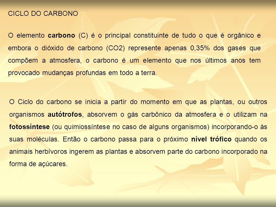 Ciclo do Carbono Uma parte do CO 2 do ar combina-se com a chuva formando ácido carbônico (H 2 CO 3 ).