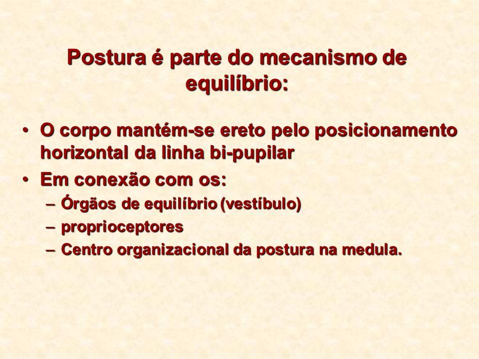 Postura é parte do mecanismo de equilíbrio: O corpo mantém-se ereto pelo posicionamento horizontal da linha bi-pupilarO corpo mantém-se ereto pelo pos