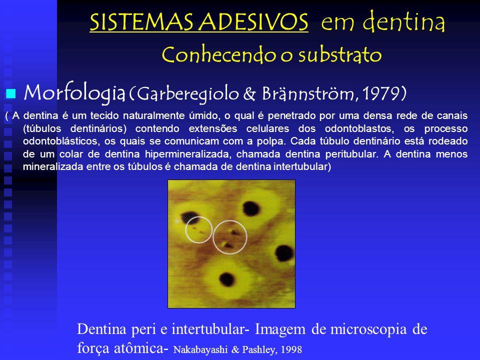 Morfologia (Garberegiolo & Brännström, 1979) ( A dentina é um tecido naturalmente úmido, o qual é penetrado por uma densa rede de canais (túbulos dent