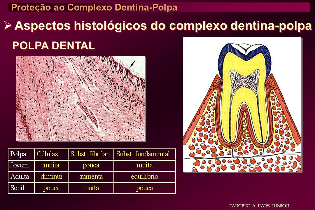 Aspectos histológicos do complexo dentina-polpa POLPA DENTAL TARCISIO A. PAES JUNIOR Proteção ao Complexo Dentina-Polpa