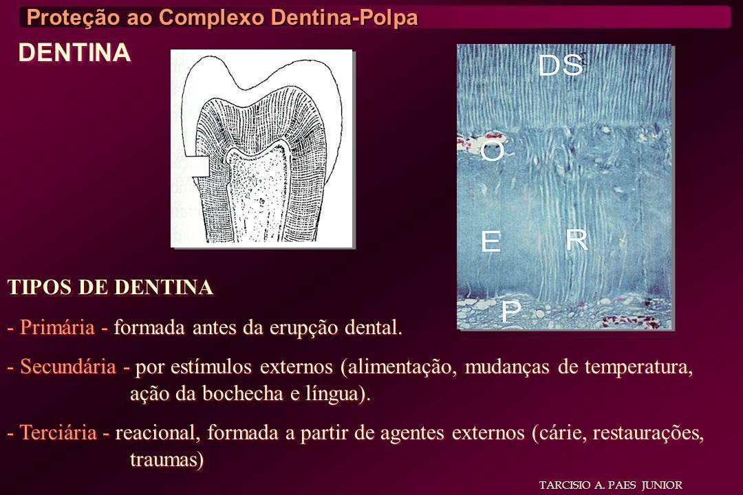 TARCISIO A. PAES JUNIOR Proteção ao Complexo Dentina-Polpa DENTINA TIPOS DE DENTINA - Primária - formada antes da erupção dental. - Secundária - por e