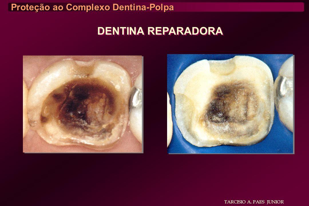 TARCISIO A. PAES JUNIOR Proteção ao Complexo Dentina-Polpa DENTINA REPARADORA