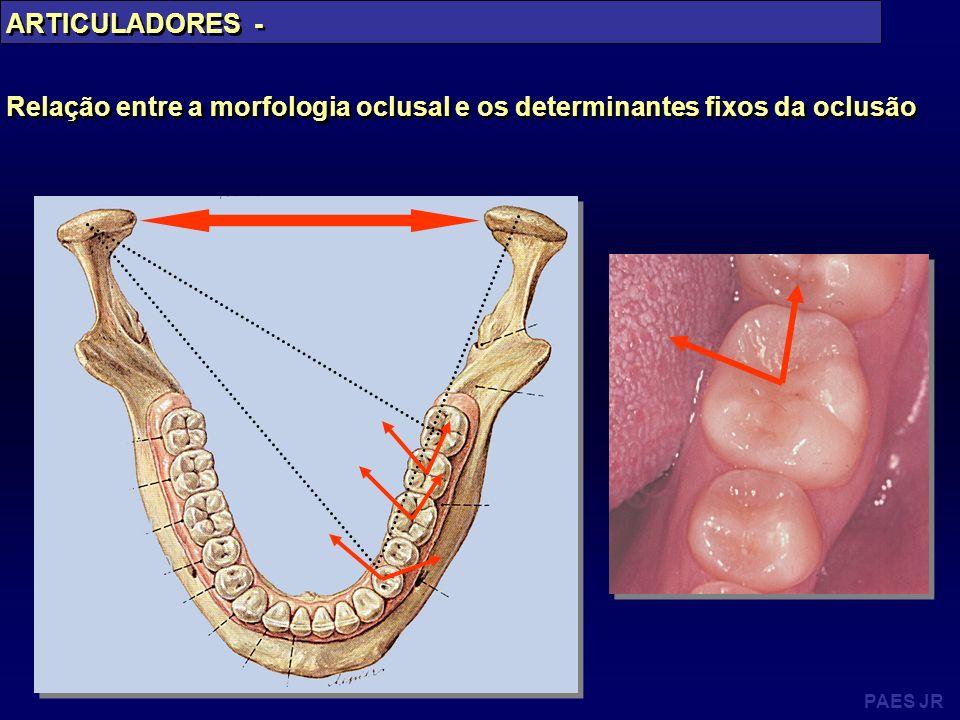 PAES JR ARTICULADORES - Relação entre a morfologia oclusal e os determinantes fixos da oclusão ARTICULADORES - Relação entre a morfologia oclusal e os