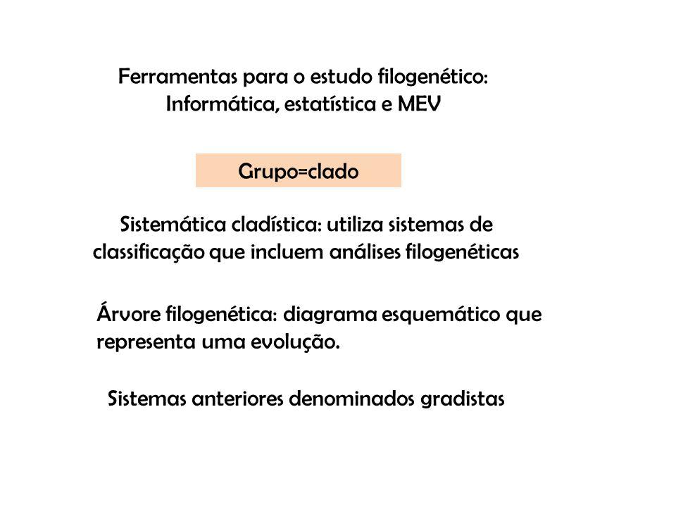 Árvore filogenética: diagrama esquemático que representa uma evolução. Grupo=clado Sistemas anteriores denominados gradistas Ferramentas para o estudo