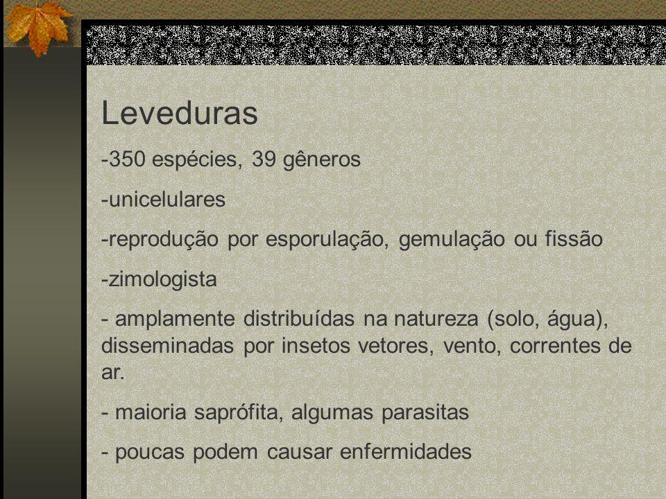 Leveduras -350 espécies, 39 gêneros -unicelulares -reprodução por esporulação, gemulação ou fissão -zimologista - amplamente distribuídas na natureza