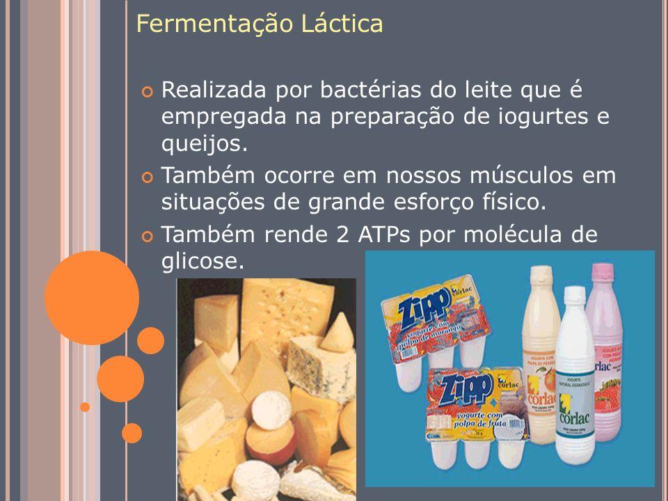 Fermentação Láctica Realizada por bactérias do leite que é empregada na preparação de iogurtes e queijos. Também ocorre em nossos músculos em situaçõe