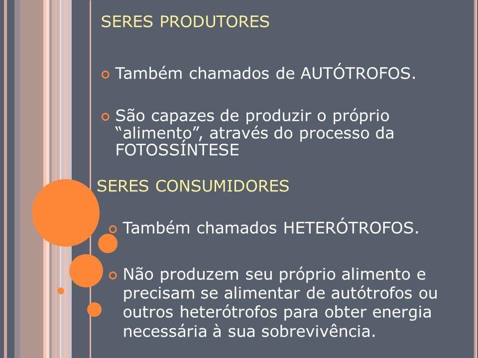 SERES PRODUTORES Também chamados de AUTÓTROFOS. São capazes de produzir o próprio alimento, através do processo da FOTOSSÍNTESE Também chamados HETERÓ