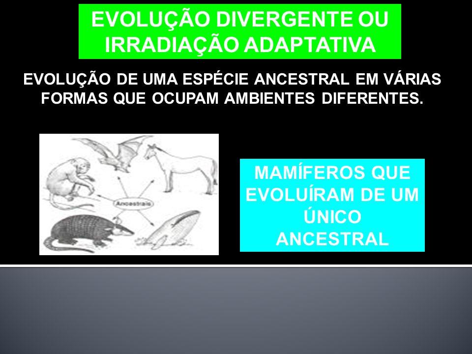 EVOLUÇÃO DIVERGENTE OU IRRADIAÇÃO ADAPTATIVA EVOLUÇÃO DE UMA ESPÉCIE ANCESTRAL EM VÁRIAS FORMAS QUE OCUPAM AMBIENTES DIFERENTES.