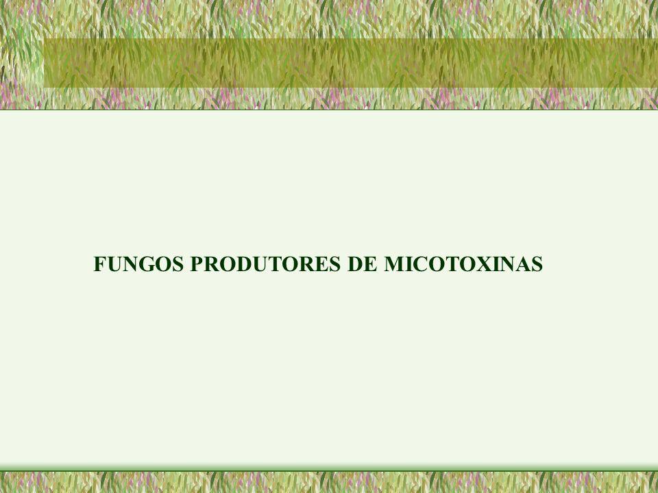 FUNGOS PRODUTORES DE MICOTOXINAS