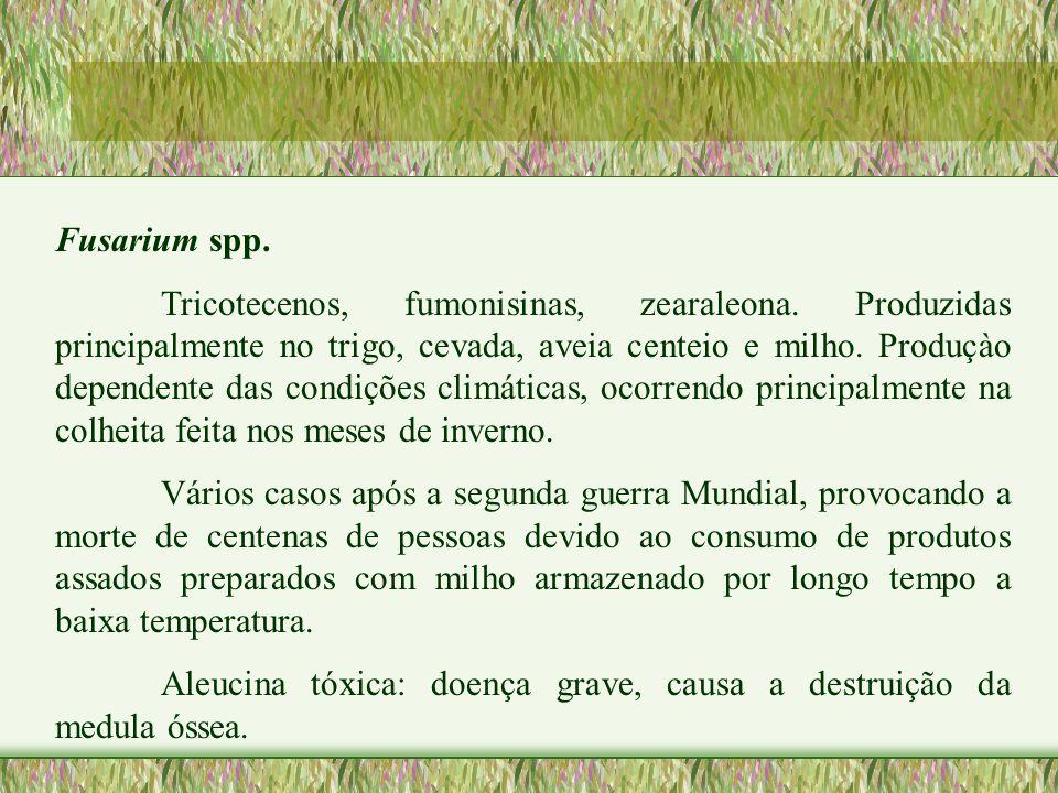 Fusarium spp. Tricotecenos, fumonisinas, zearaleona. Produzidas principalmente no trigo, cevada, aveia centeio e milho. Produçào dependente das condiç