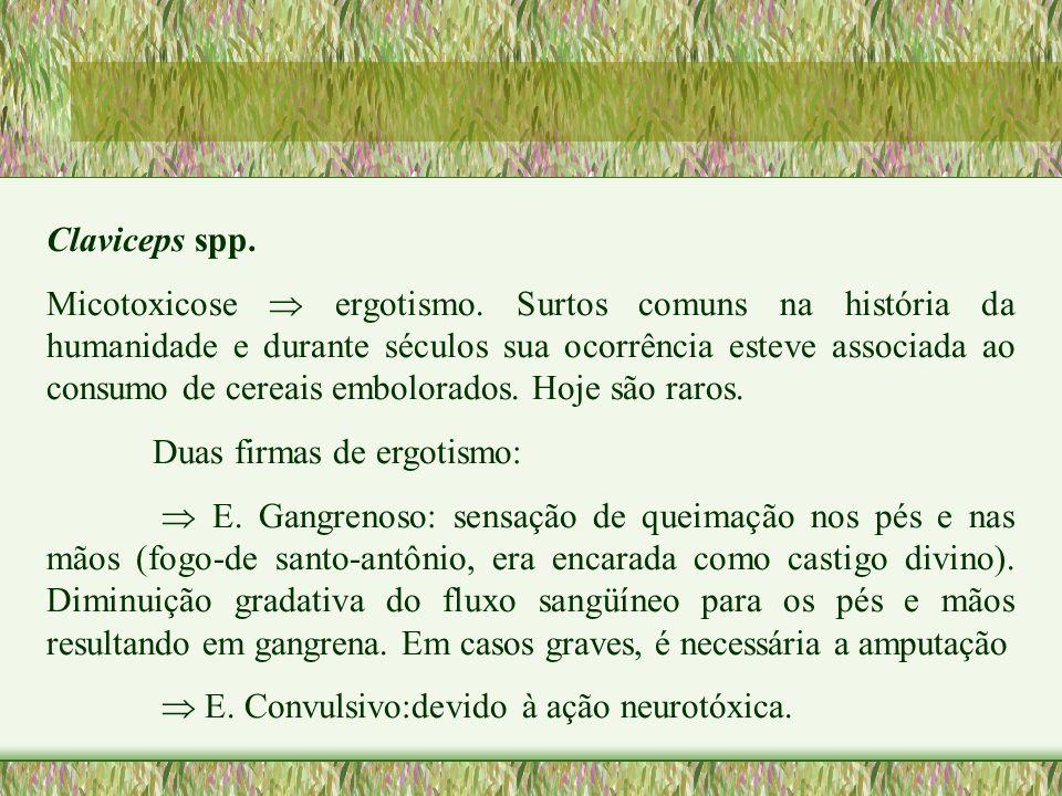 Claviceps spp. Micotoxicose ergotismo. Surtos comuns na história da humanidade e durante séculos sua ocorrência esteve associada ao consumo de cereais