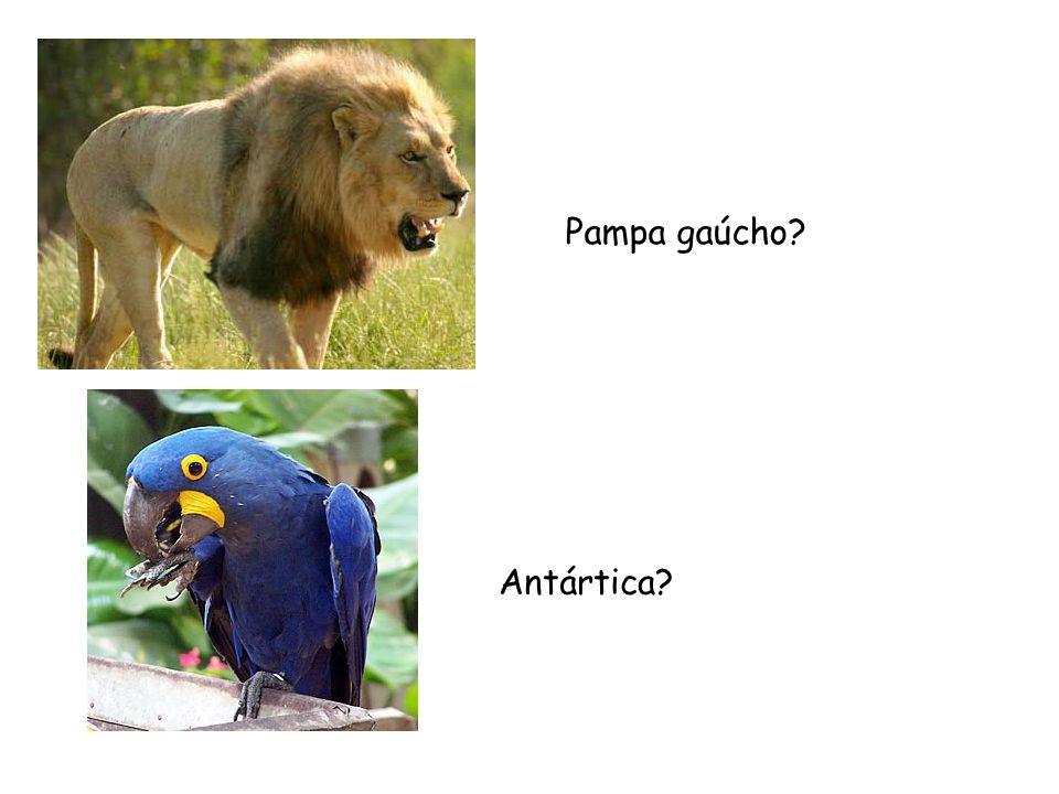 Pampa gaúcho? Antártica?