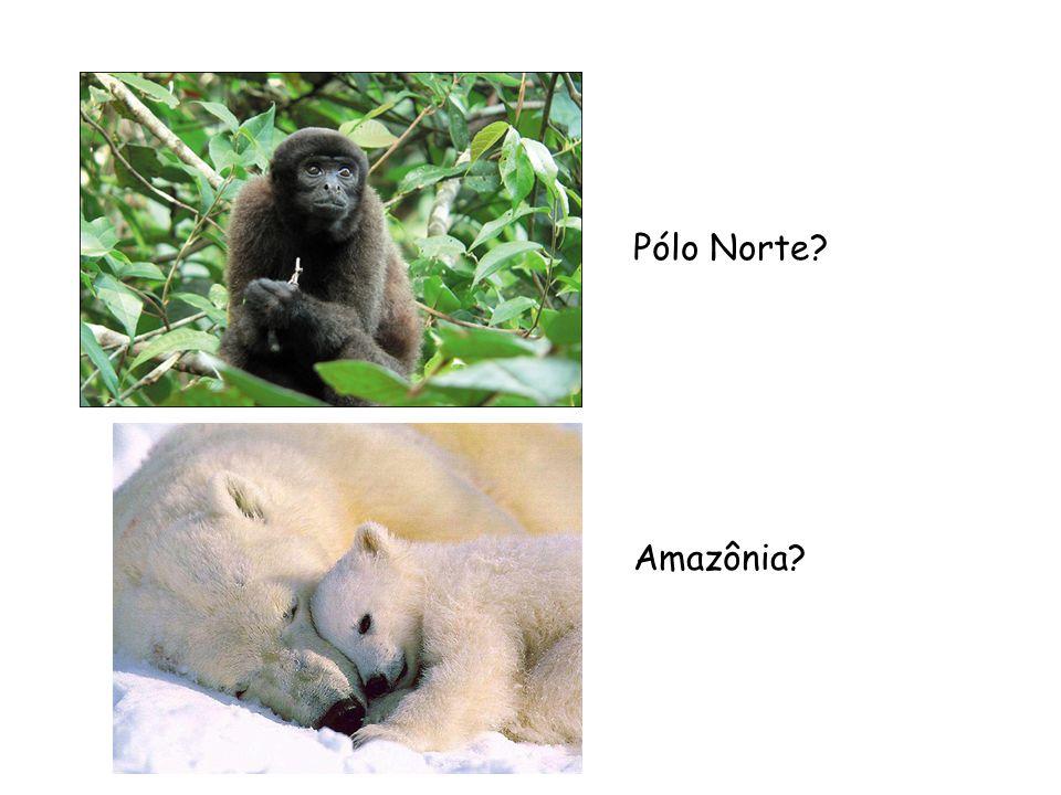 Pólo Norte? Amazônia?
