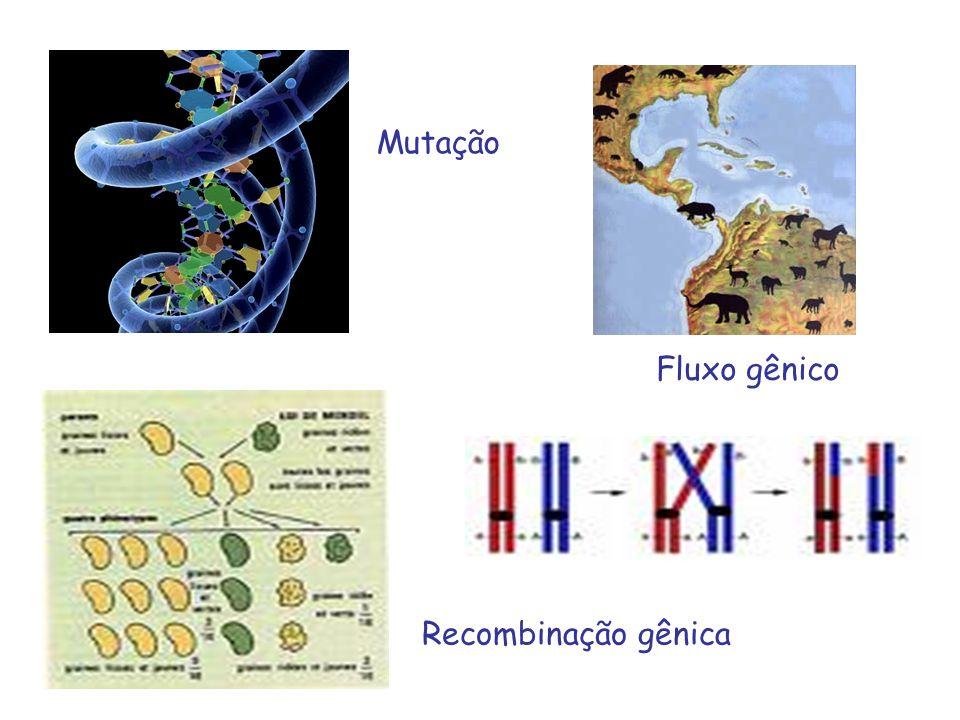 Mutação Recombinação gênica Fluxo gênico