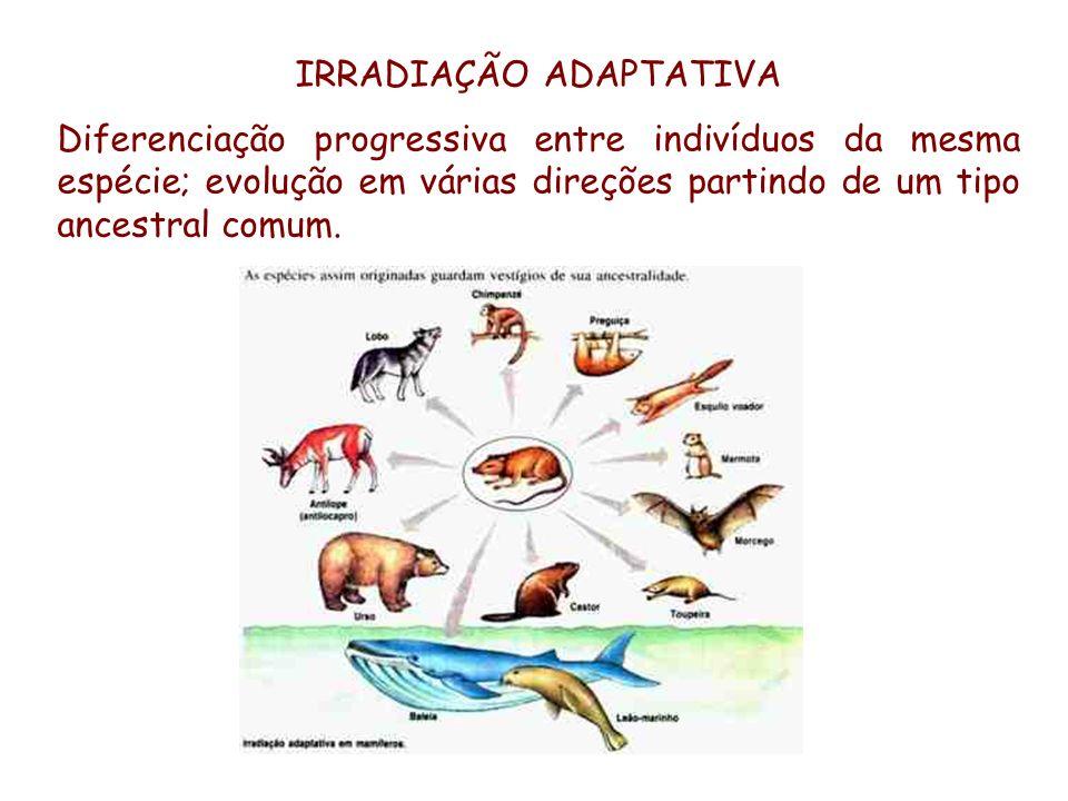 IRRADIAÇÃO ADAPTATIVA Diferenciação progressiva entre indivíduos da mesma espécie; evolução em várias direções partindo de um tipo ancestral comum.
