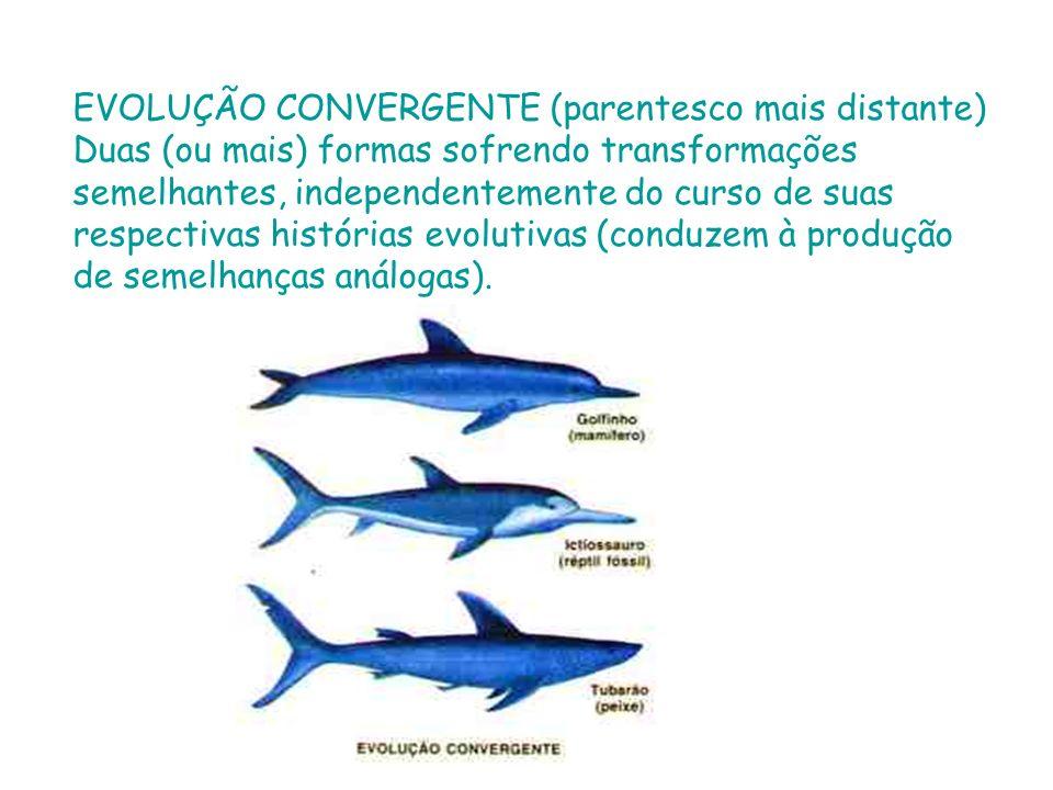 EVOLUÇÃO CONVERGENTE (parentesco mais distante) Duas (ou mais) formas sofrendo transformações semelhantes, independentemente do curso de suas respecti