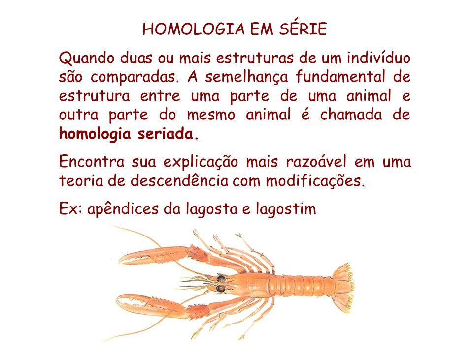 HOMOLOGIA EM SÉRIE Quando duas ou mais estruturas de um indivíduo são comparadas. A semelhança fundamental de estrutura entre uma parte de uma animal