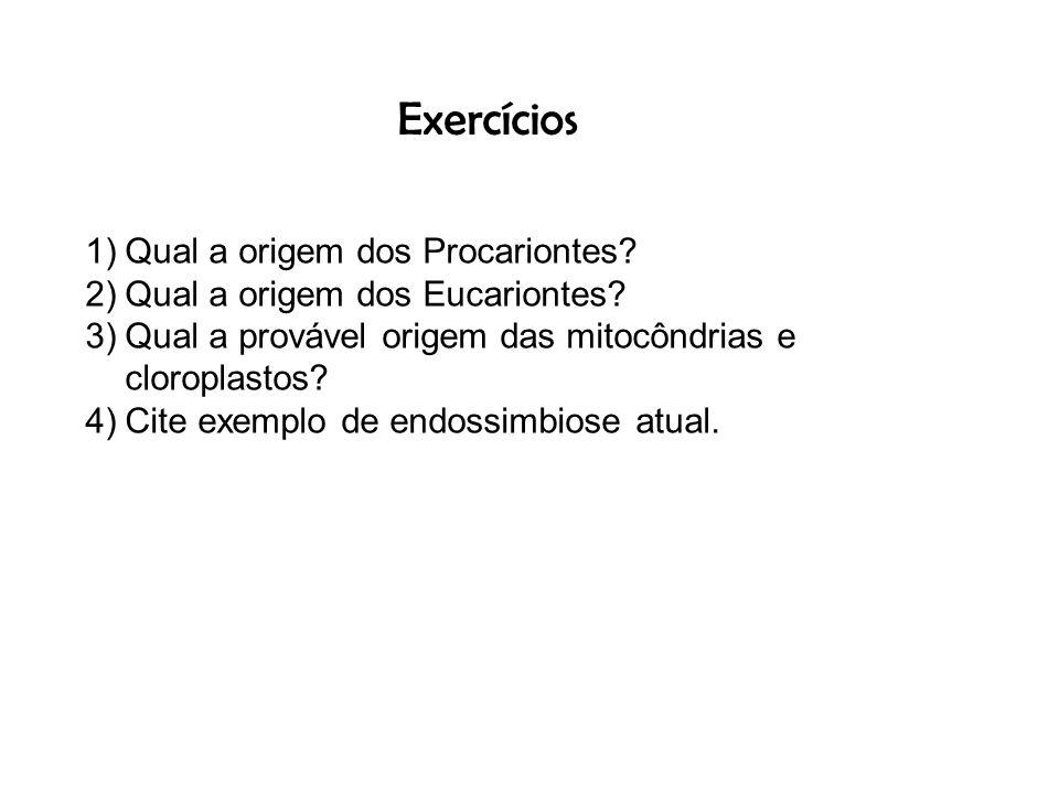 Exercícios 1)Qual a origem dos Procariontes? 2)Qual a origem dos Eucariontes? 3)Qual a provável origem das mitocôndrias e cloroplastos? 4)Cite exemplo