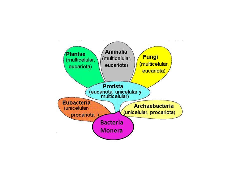 r Bacteria Monera