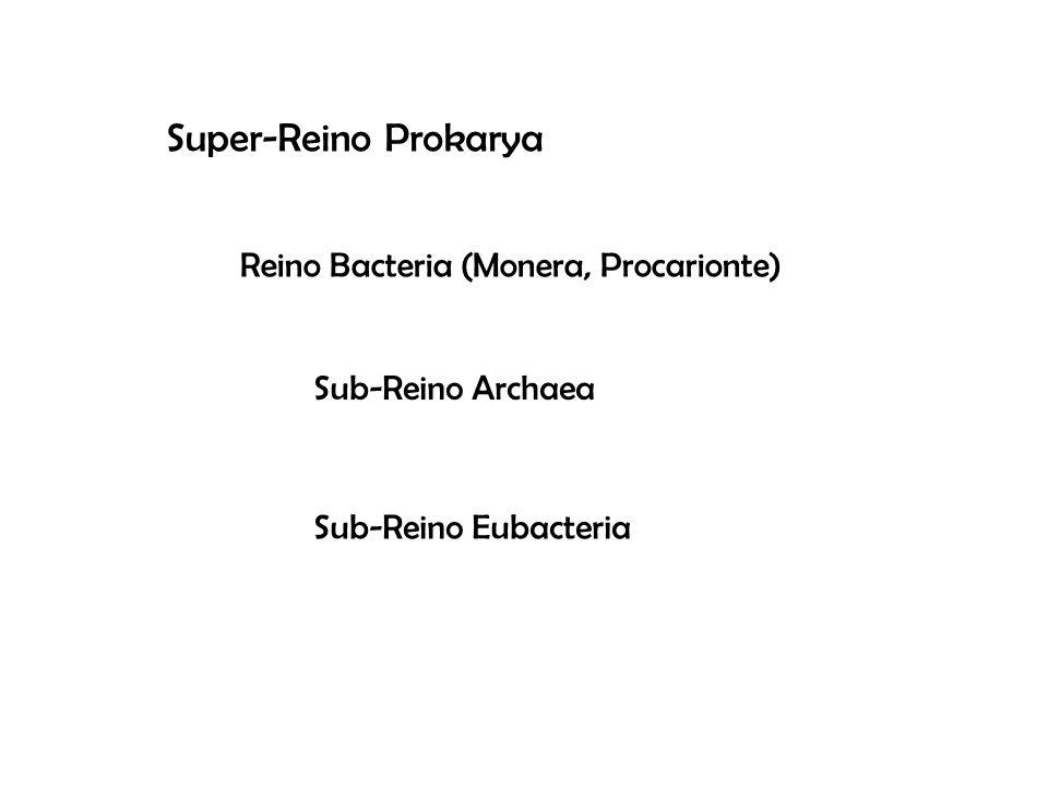 Super-Reino Prokarya Reino Bacteria (Monera, Procarionte) Sub-Reino Archaea Sub-Reino Eubacteria