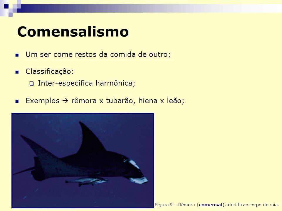 Comensalismo Um ser come restos da comida de outro; Classificação: Inter-específica harmônica; Exemplos rêmora x tubarão, hiena x leão; Figura 9 – Rêmora (comensal) aderida ao corpo de raia.