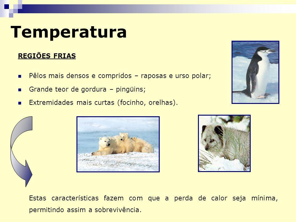 Temperatura REGIÕES FRIAS Pêlos mais densos e compridos – raposas e urso polar; Grande teor de gordura – pingüins; Extremidades mais curtas (focinho, orelhas).