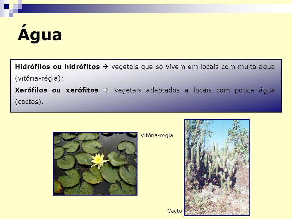 Hidrófilos ou hidrófitos vegetais que só vivem em locais com muita água (vitória-régia); Xerófilos ou xerófitos vegetais adaptados a locais com pouca água (cactos).