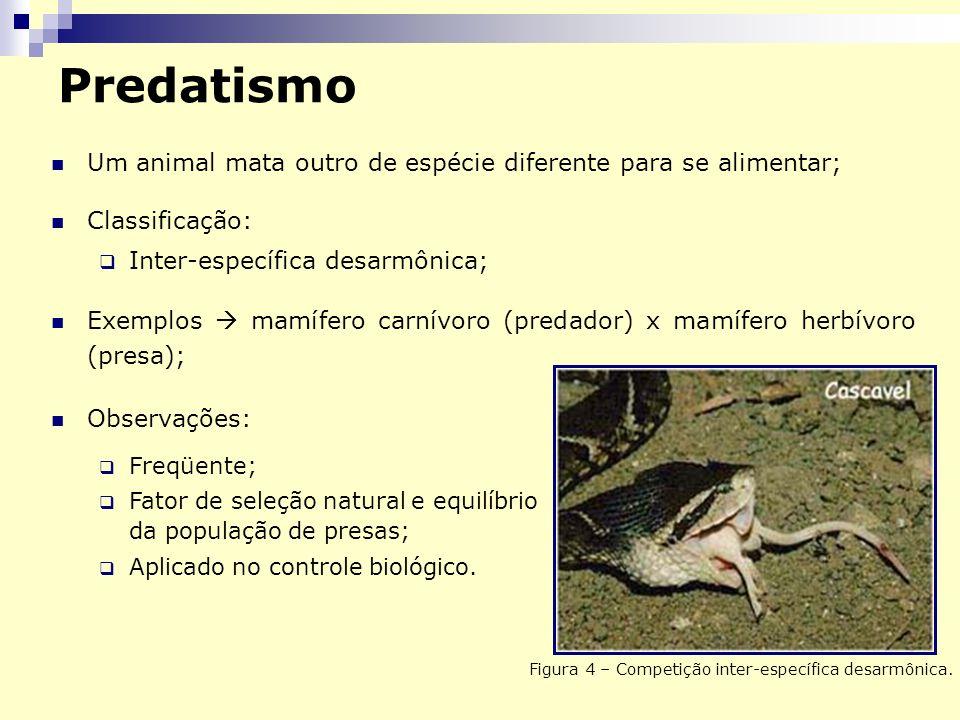 Predatismo Um animal mata outro de espécie diferente para se alimentar; Classificação: Inter-específica desarmônica; Exemplos mamífero carnívoro (predador) x mamífero herbívoro (presa); Figura 4 – Competição inter-específica desarmônica.
