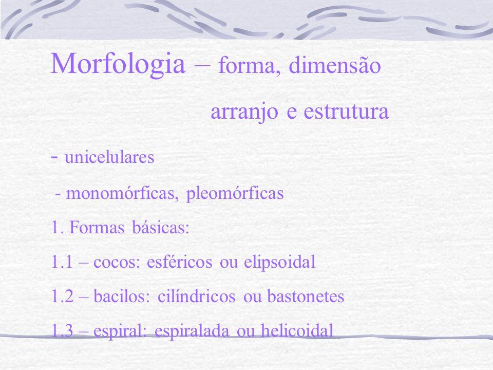 Morfologia – forma, dimensão arranjo e estrutura - unicelulares - monomórficas, pleomórficas 1. Formas básicas: 1.1 – cocos: esféricos ou elipsoidal 1