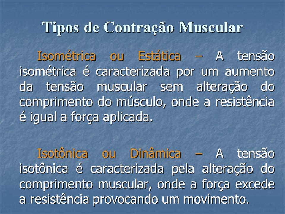 Tipos de Contração Muscular Isométrica ou Estática – A tensão isométrica é caracterizada por um aumento da tensão muscular sem alteração do compriment