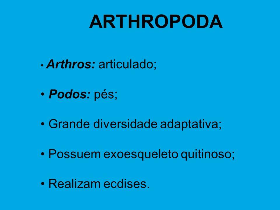 ARTHROPODA Arthros: articulado; Podos: pés; Grande diversidade adaptativa; Possuem exoesqueleto quitinoso; Realizam ecdises.