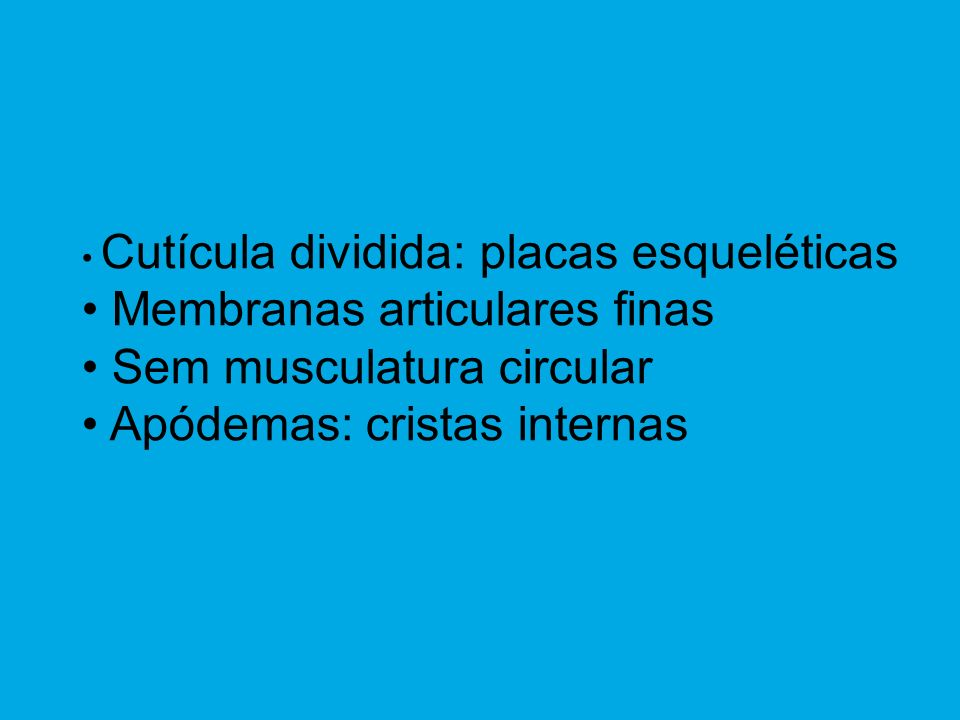 Cutícula dividida: placas esqueléticas Membranas articulares finas Sem musculatura circular Apódemas: cristas internas