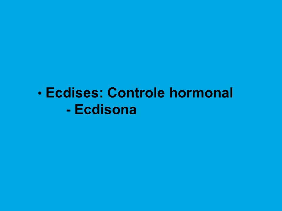Ecdises: Controle hormonal - Ecdisona