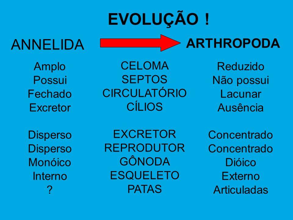 EVOLUÇÃO ! ANNELIDA ARTHROPODA CELOMA SEPTOS CIRCULATÓRIO CÍLIOS EXCRETOR REPRODUTOR GÔNODA ESQUELETO PATAS Reduzido Não possui Lacunar Ausência Conce