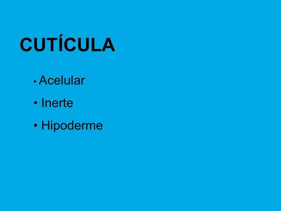CUTÍCULA Acelular Inerte Hipoderme