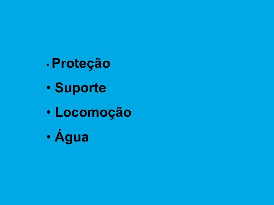 Proteção Suporte Locomoção Água