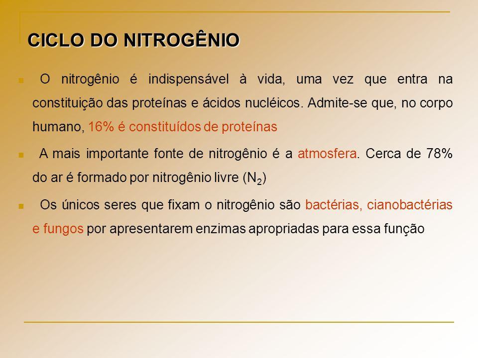 CICLO DO NITROGÊNIO O nitrogênio é indispensável à vida, uma vez que entra na constituição das proteínas e ácidos nucléicos. Admite-se que, no corpo h