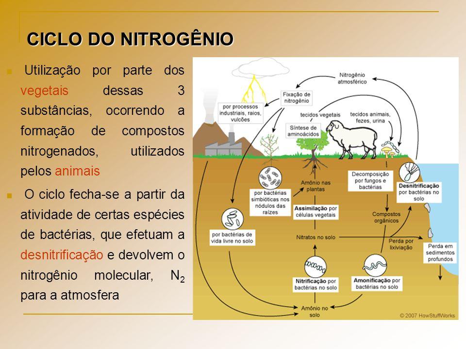 CICLO DO NITROGÊNIO Utilização por parte dos vegetais dessas 3 substâncias, ocorrendo a formação de compostos nitrogenados, utilizados pelos animais O
