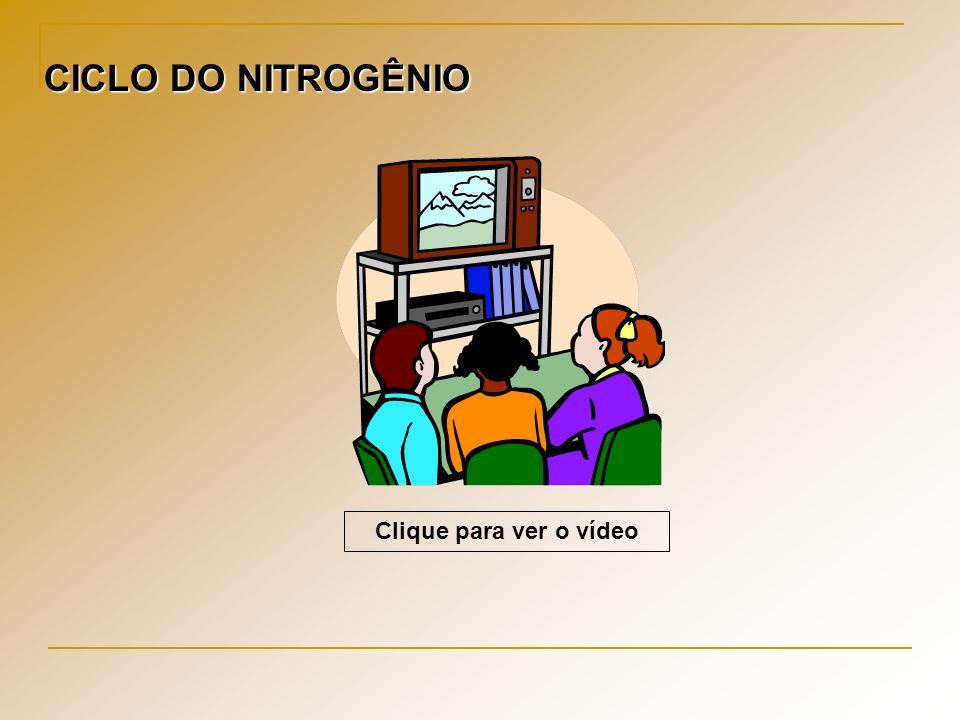 Clique para ver o vídeo CICLO DO NITROGÊNIO