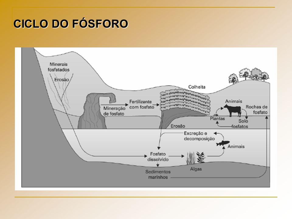 CICLO DO FÓSFORO
