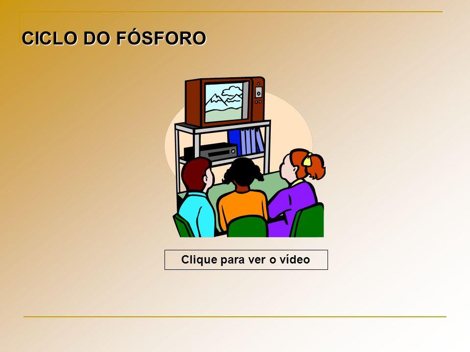Clique para ver o vídeo CICLO DO FÓSFORO