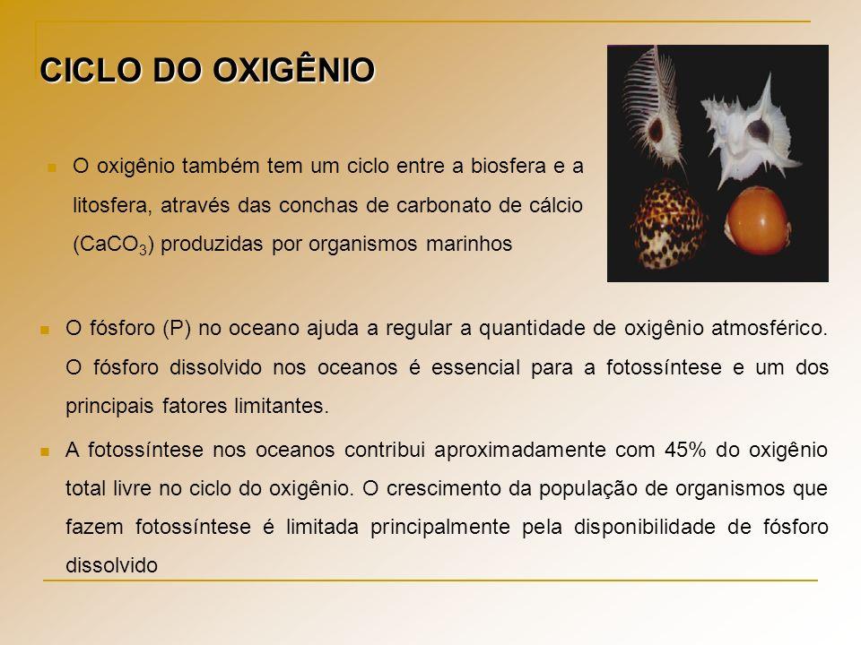 CICLO DO OXIGÊNIO O oxigênio também tem um ciclo entre a biosfera e a litosfera, através das conchas de carbonato de cálcio (CaCO 3 ) produzidas por o