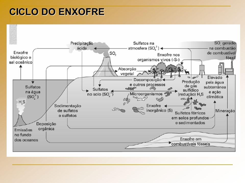 CICLO DO ENXOFRE